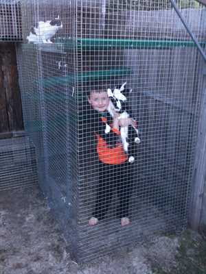 boy with cats in cat enclosure