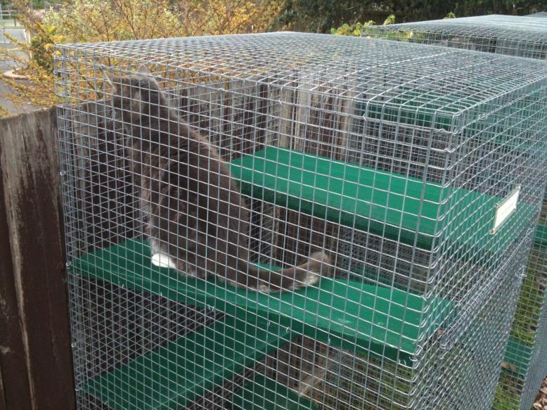 Cat Enclosures Outdoor Custom Cat Runs Cat Proof Fence Kits