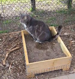 Timber Litter Box Side